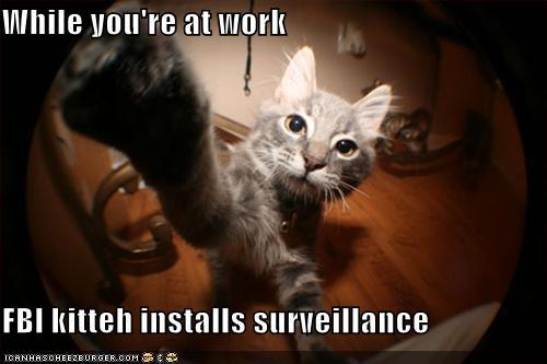 FBI kitteh